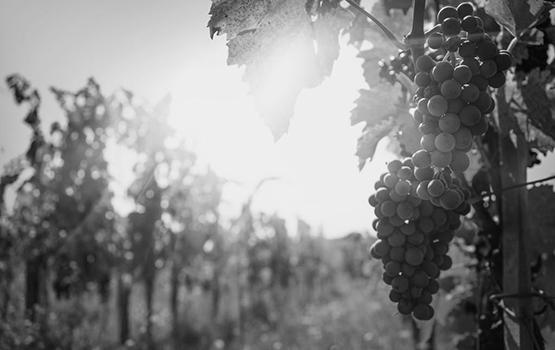 scatole-sandrone-vinifera